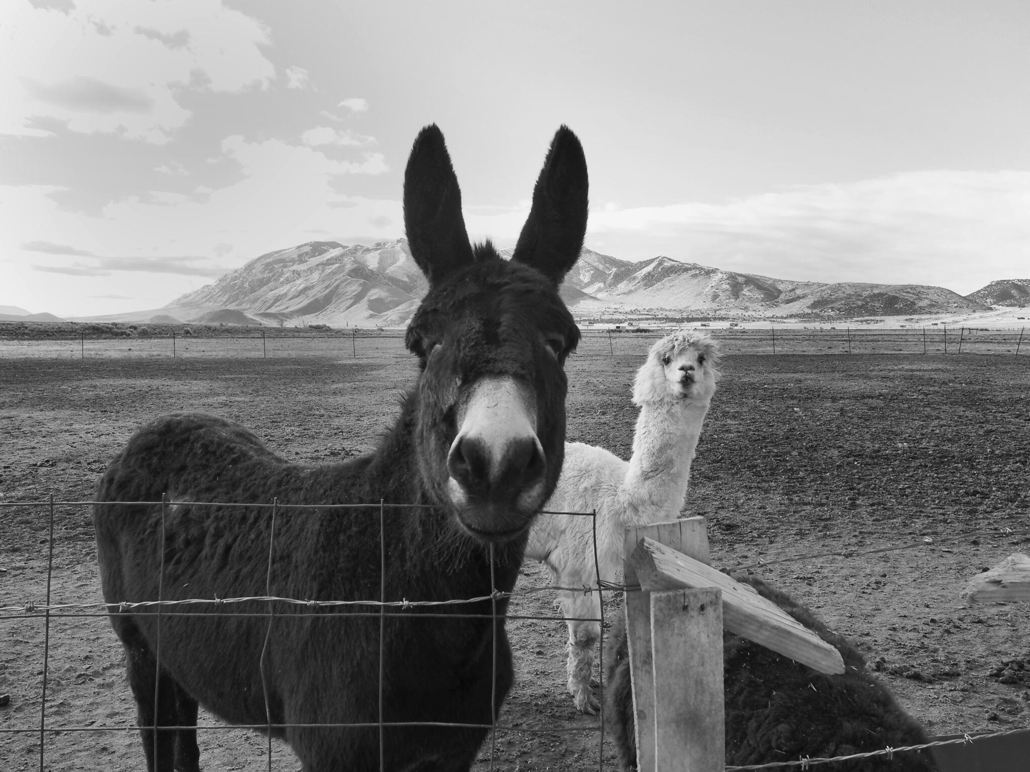 Donkey2.JPG