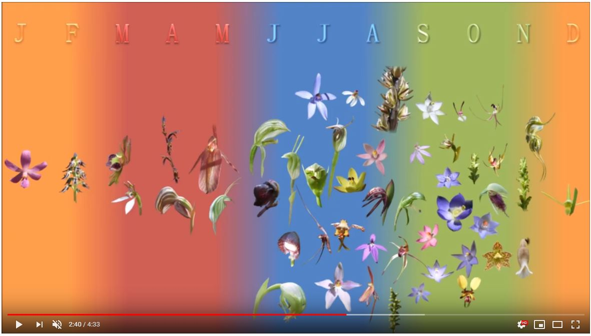 Flowering season of some South Australian orchids - still from the NOSSA video