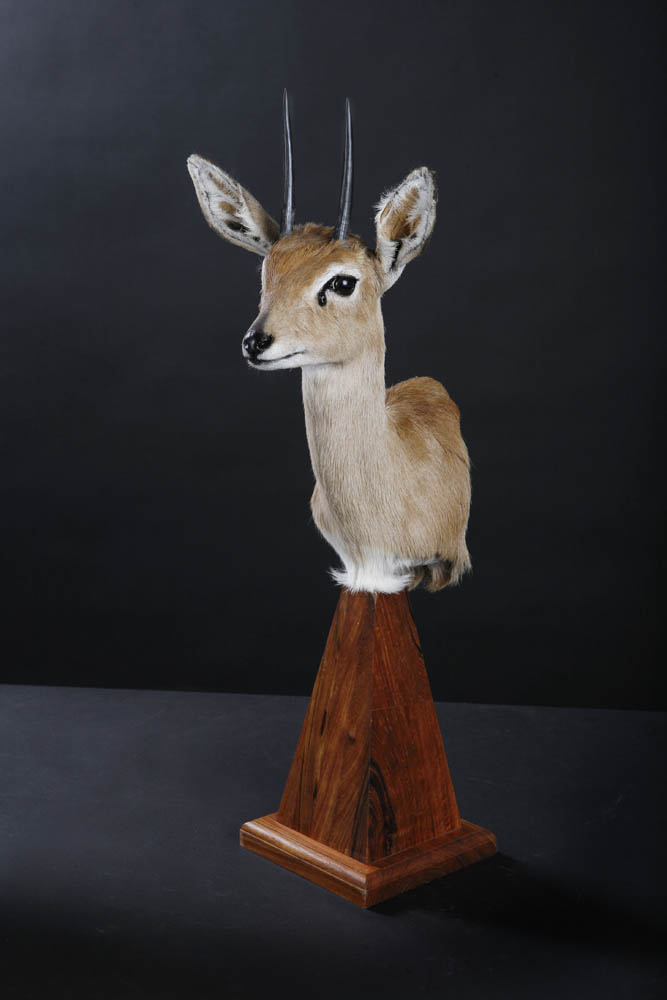 Steenbok Pedestal.jpg
