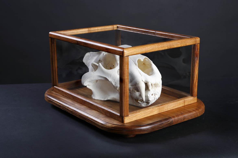 Glass case1.jpg