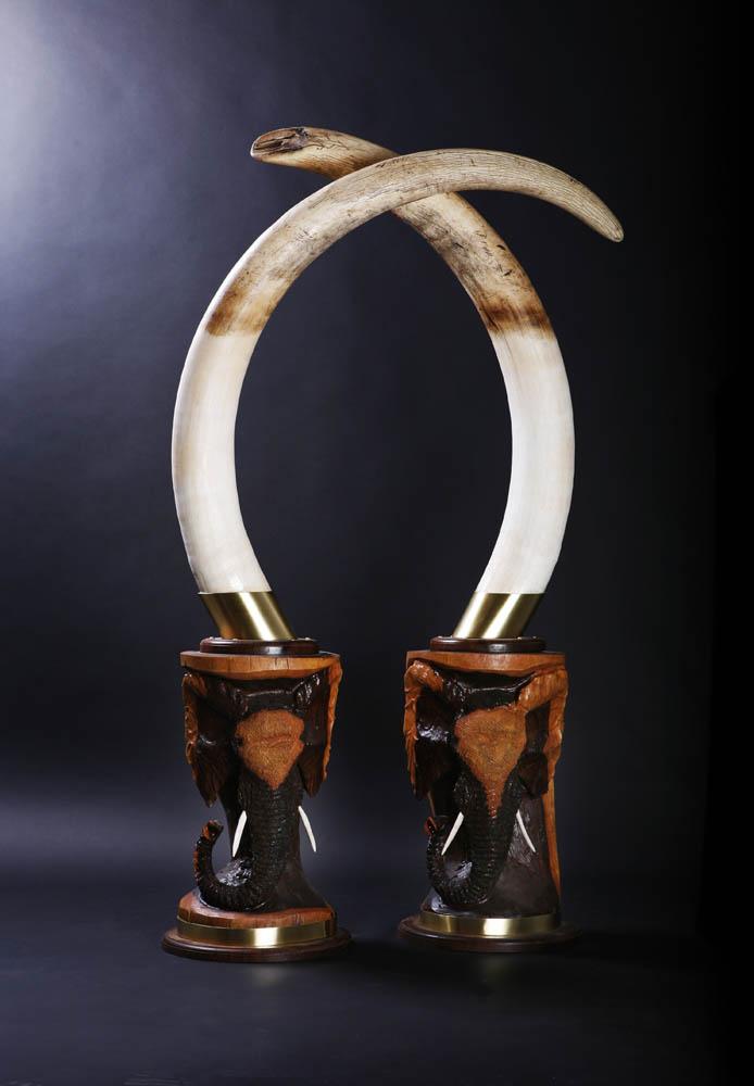 Elephant Tusks.jpg