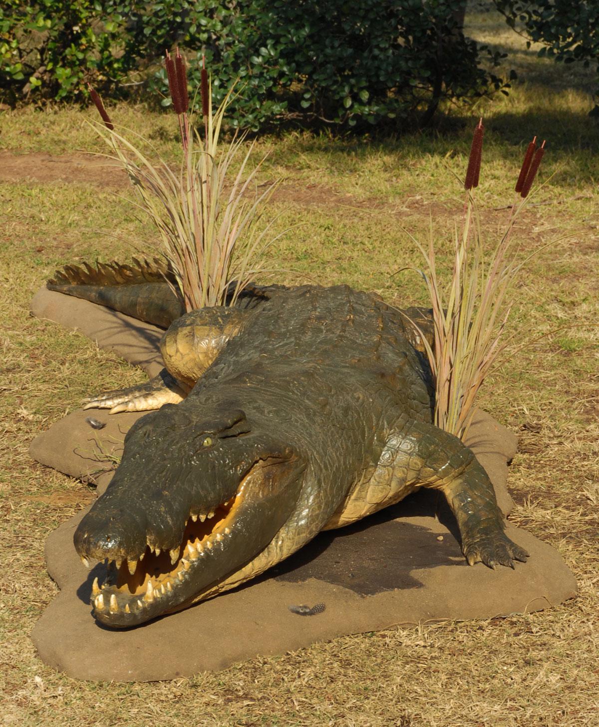 Crocodile_front2.jpg