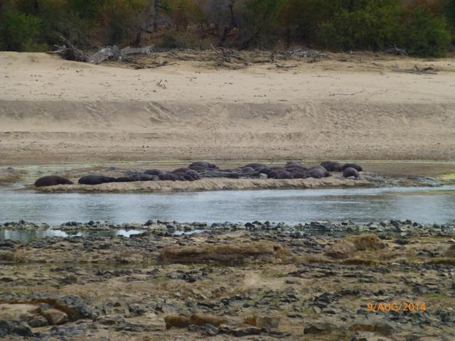 Hunt South Africa Letaba River38.jpg