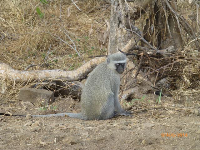 Hunt South Africa Letaba River37.jpg