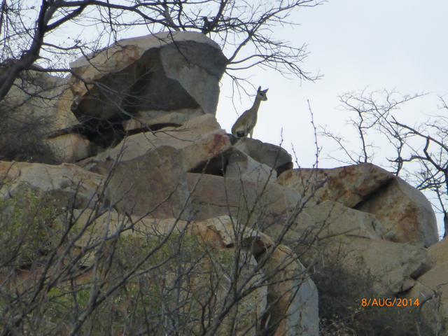 Hunt South Africa Letaba River32.jpg