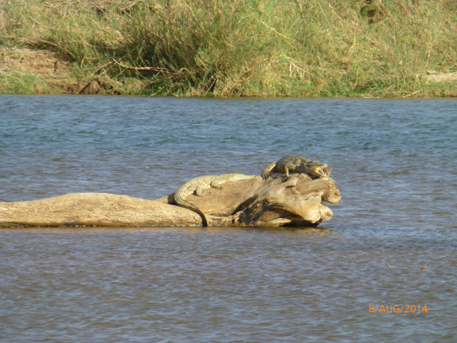 Hunt South Africa Letaba River31.jpg