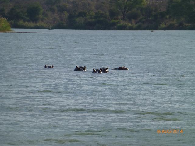 Hunt South Africa Letaba River28.jpg