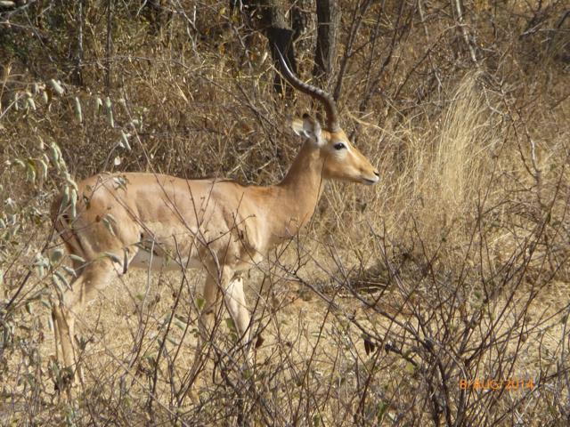 Hunt South Africa Letaba River23.jpg