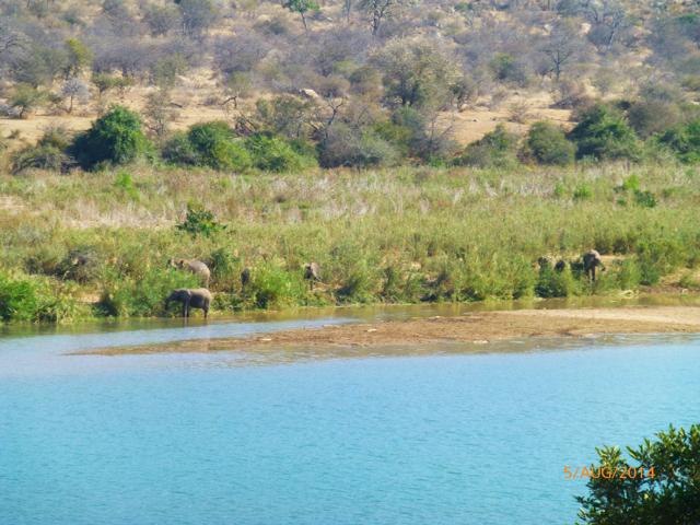 Hunt South Africa Letaba River19.jpg