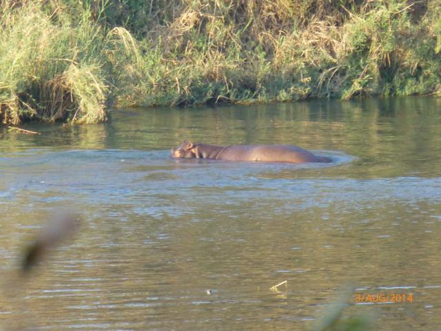 Hunt South Africa Letaba River18.jpg
