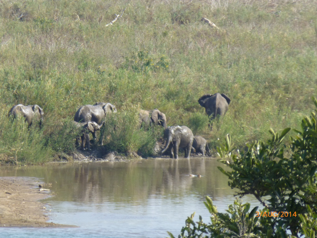 Hunt South Africa Letaba River17.jpg