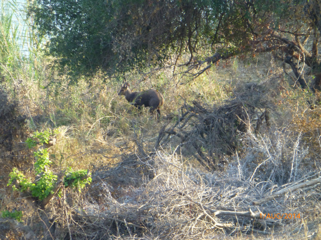 Hunt South Africa Letaba River16.jpg