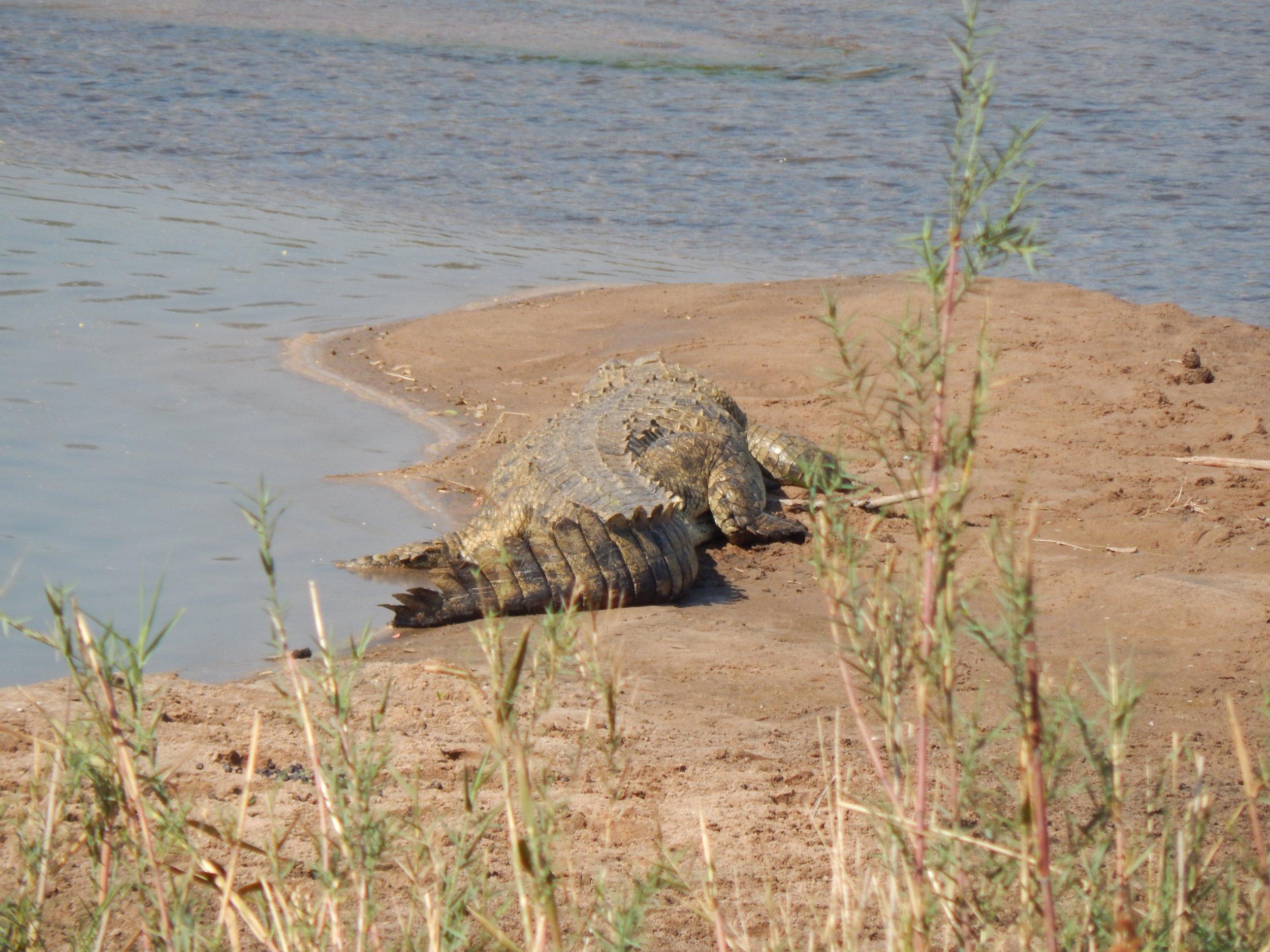 Hunt South Africa Letaba River10.jpg