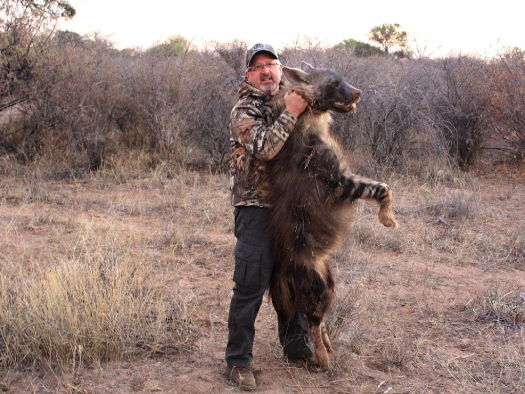 Brown Hyena Hunt02.jpg