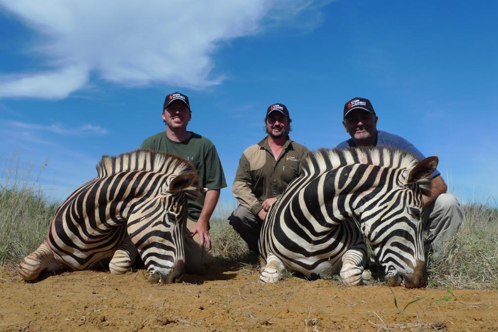 Zebra Hunt35.JPG