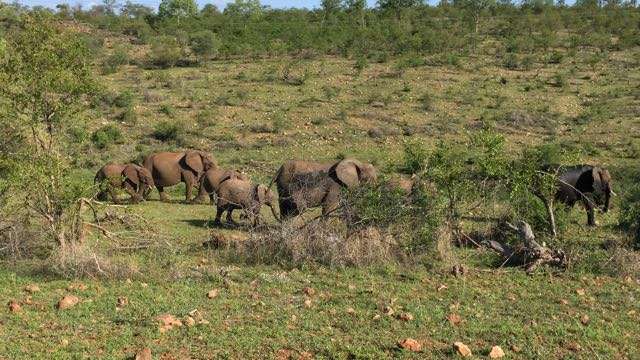 Hunt in Africa 124.jpg