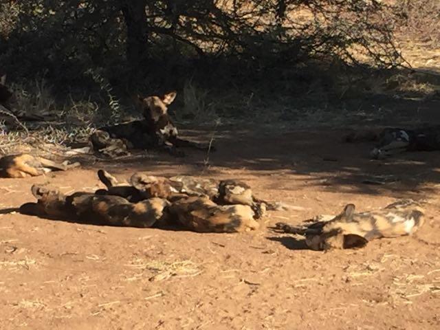 Hunt in Africa 43.jpg