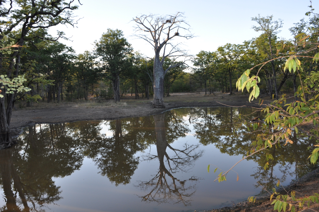 Hunt Zimabawe SE115.JPG