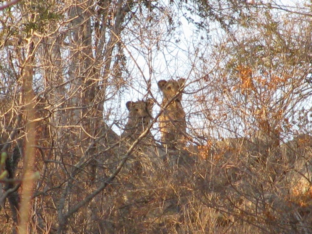 Hunt Zimabawe SE112.jpg