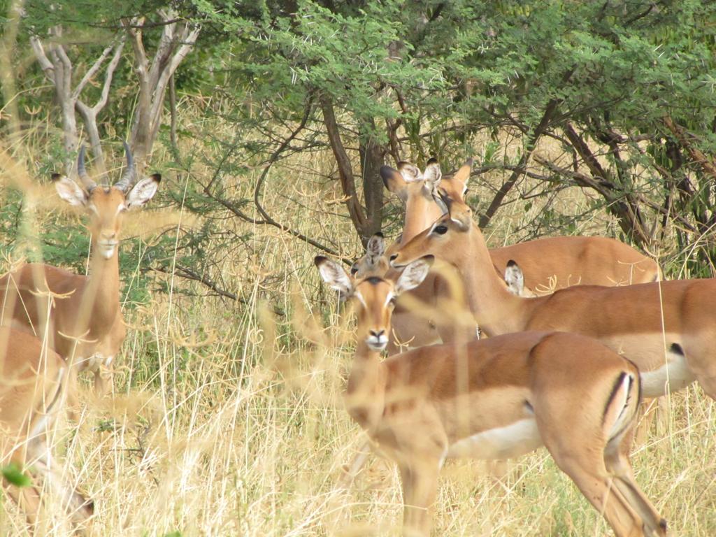 Hunt Zimabawe SE111.JPG