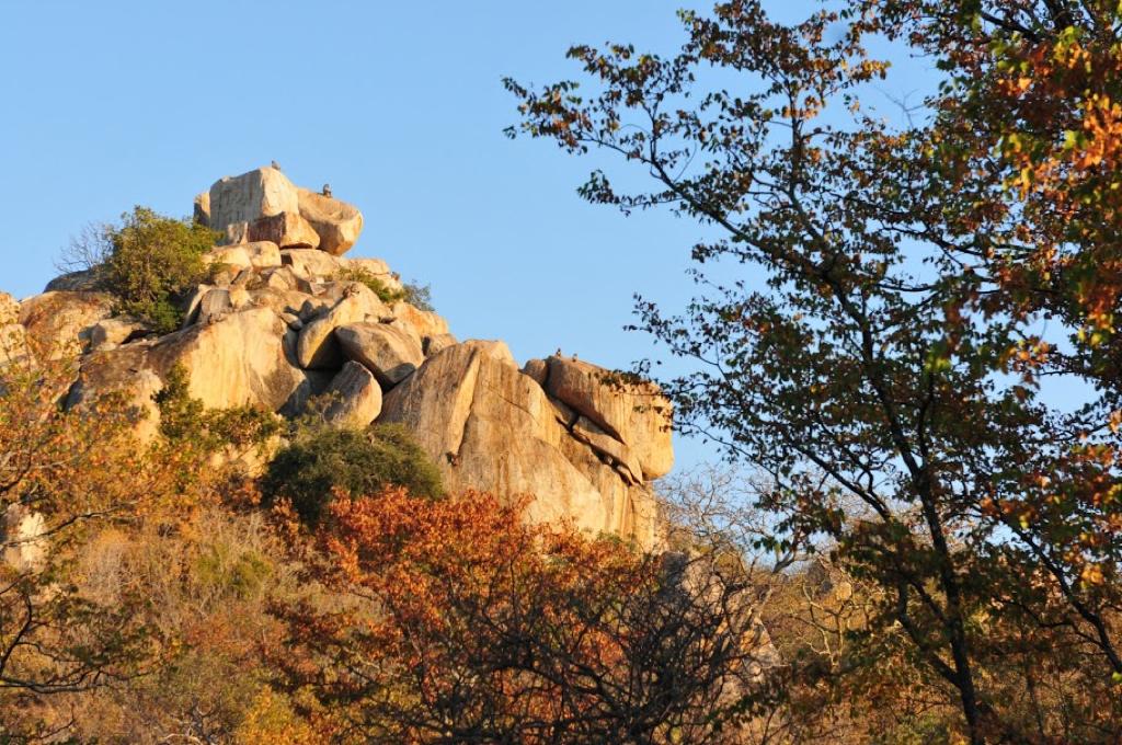 Hunt Zimabawe SE105.JPG