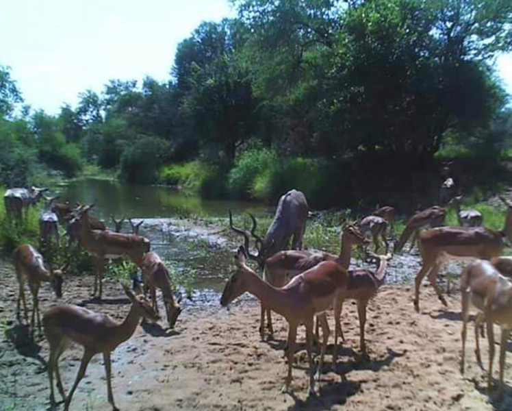SA Limpopo Camp3.jpg