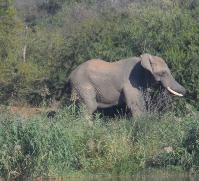 Elephant River Safari2.jpg