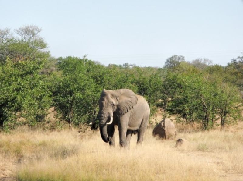 Zim Limpopo Camp14.jpg