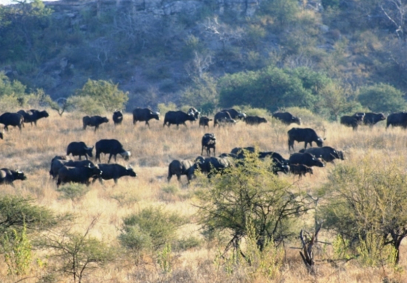 Zim Limpopo Camp13.jpg
