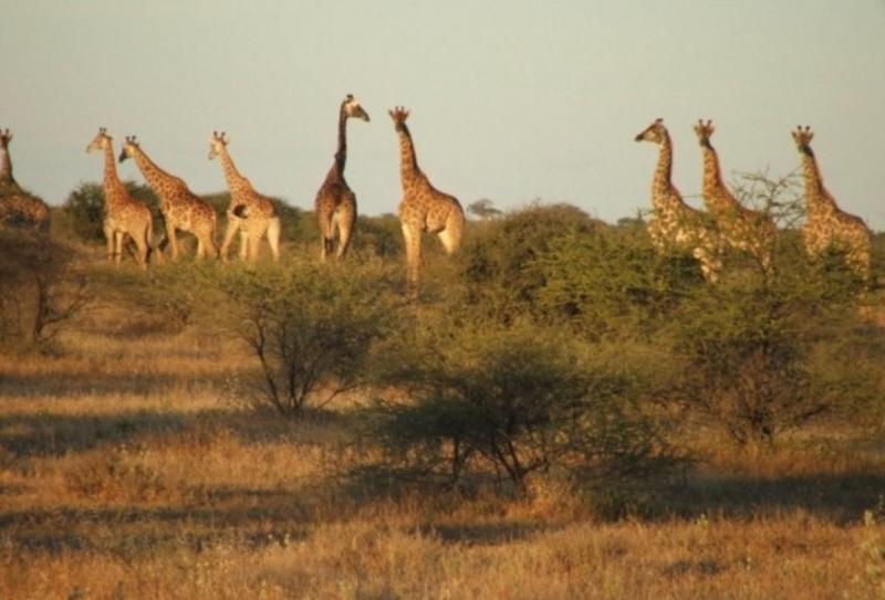 Zim Limpopo Camp11.jpg