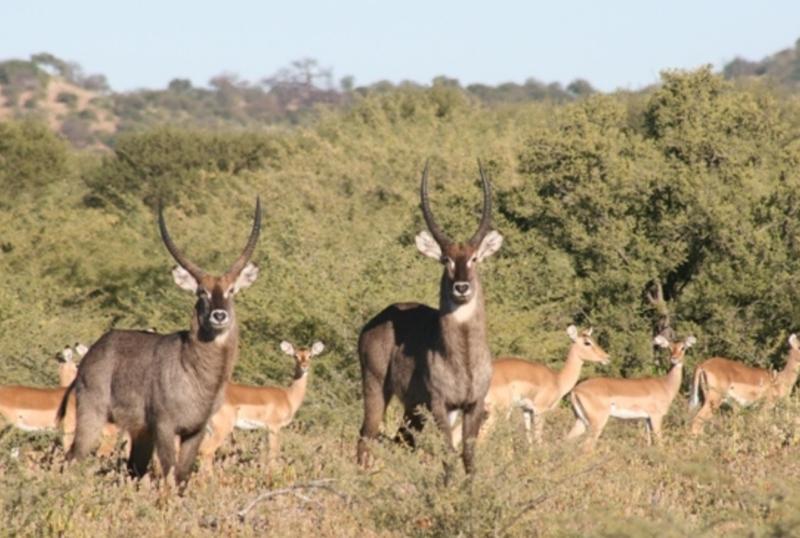 Zim Limpopo Camp6.jpg