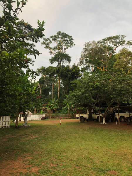 Cameroon Forrest CAMP5.jpg