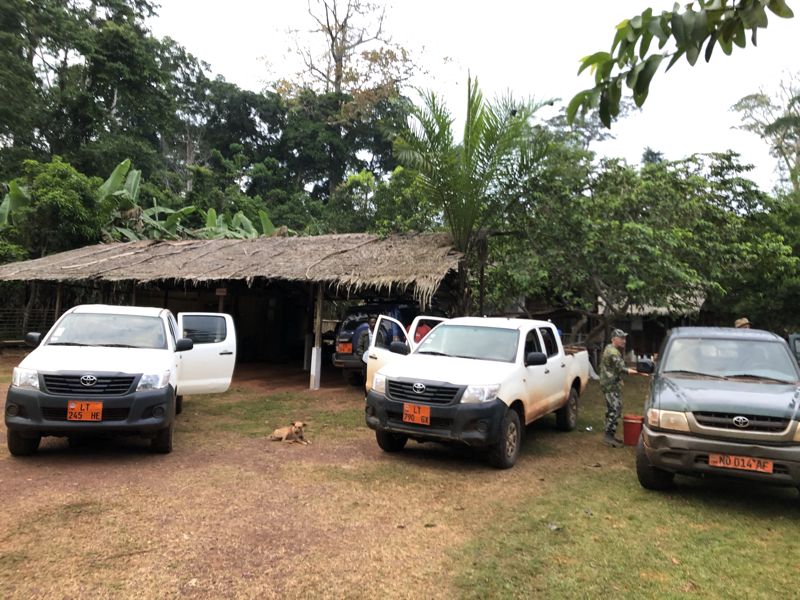 Cameroon Forrest CAMP14.jpg