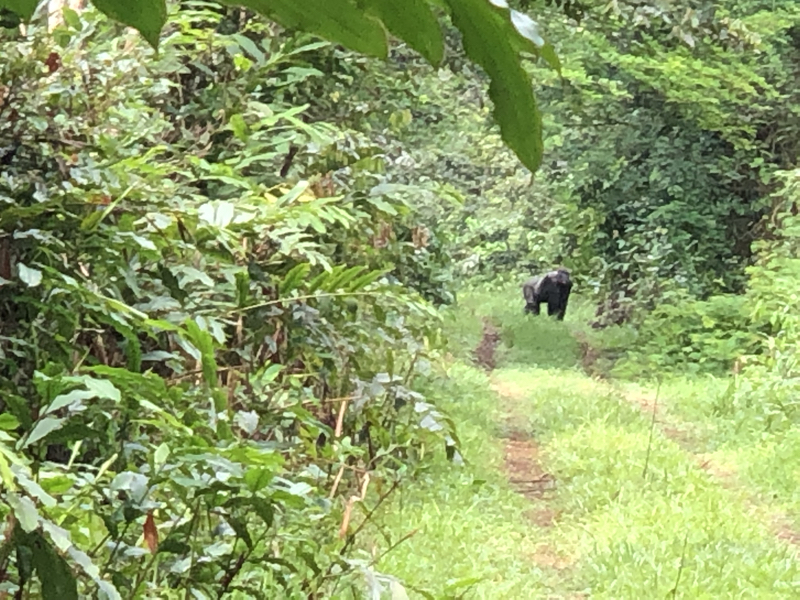 Cameroon Forrest COOL PICS35 2.jpg