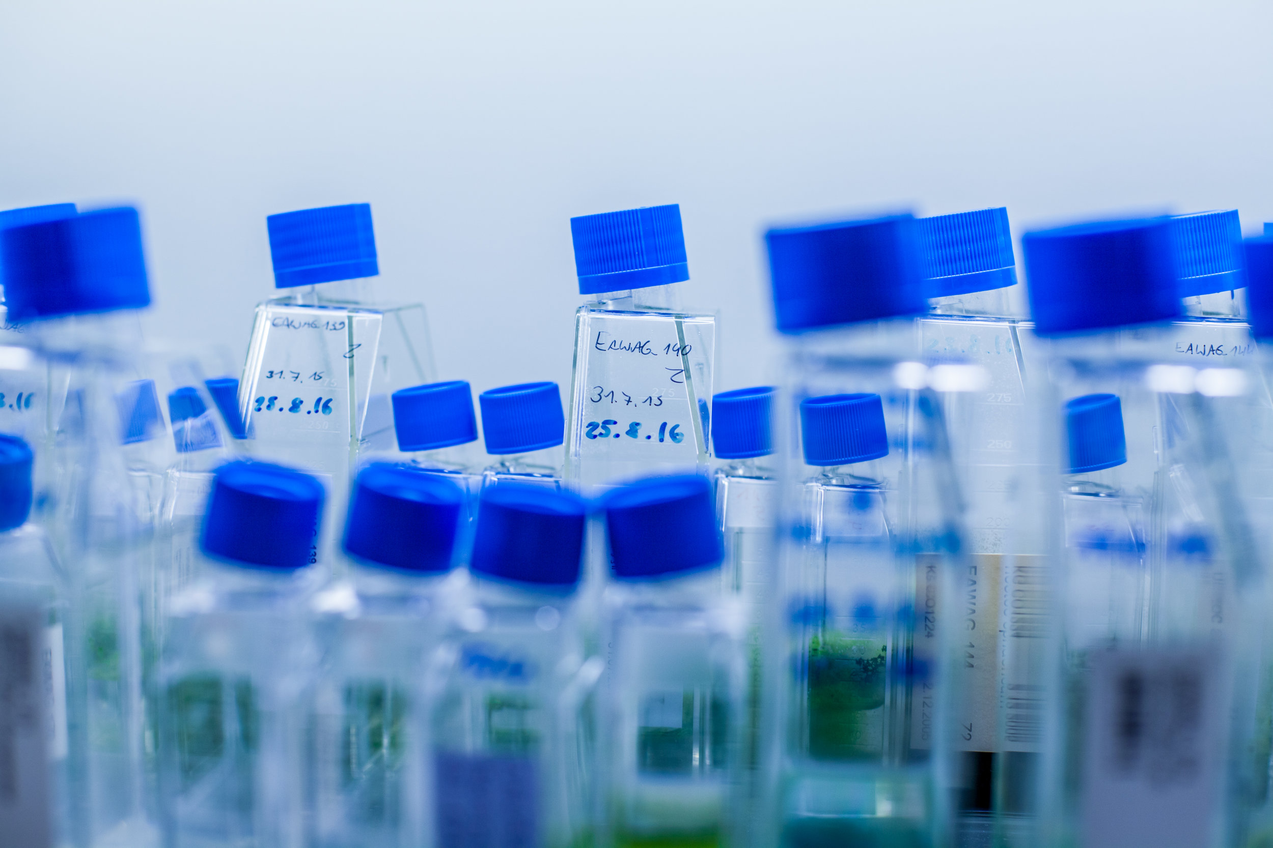 Cyanobacterial culture