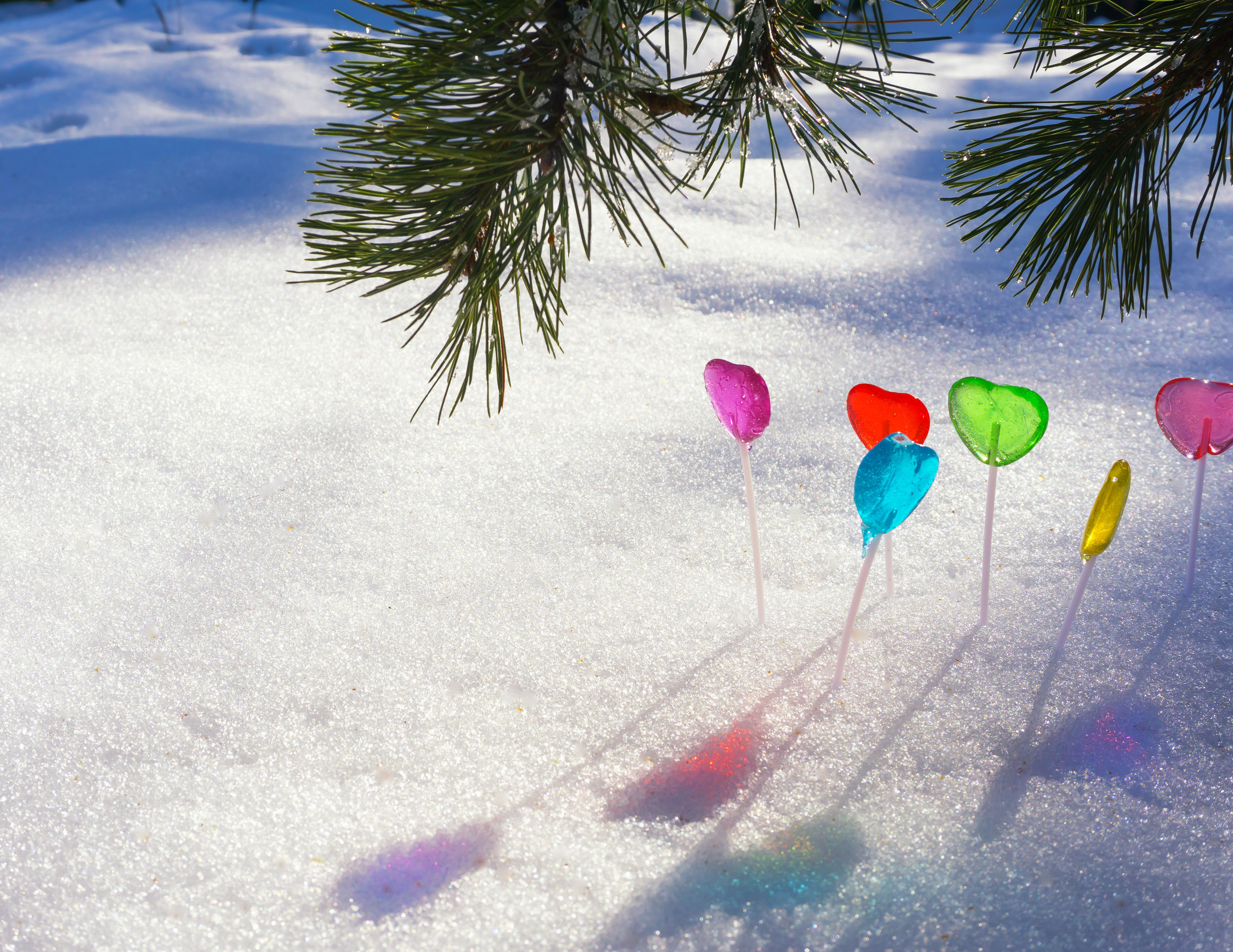 Snow Lollipops Pine.jpg
