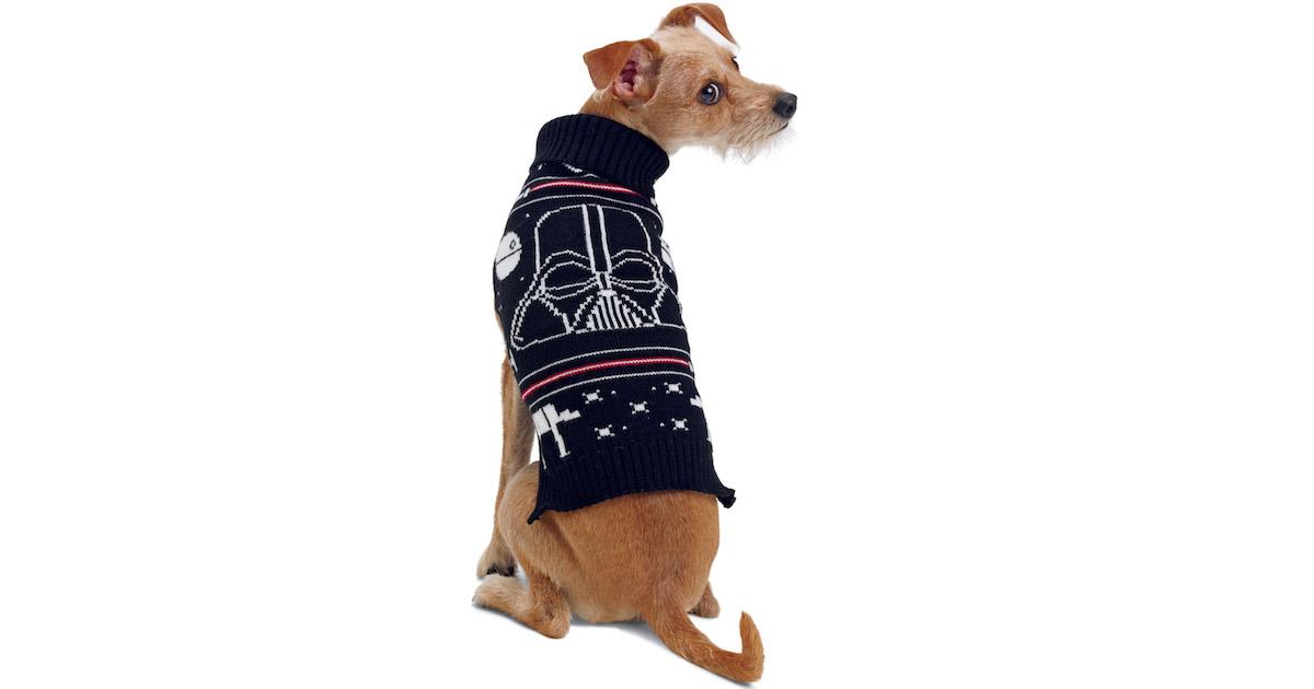 Dog in Sweater.jpg