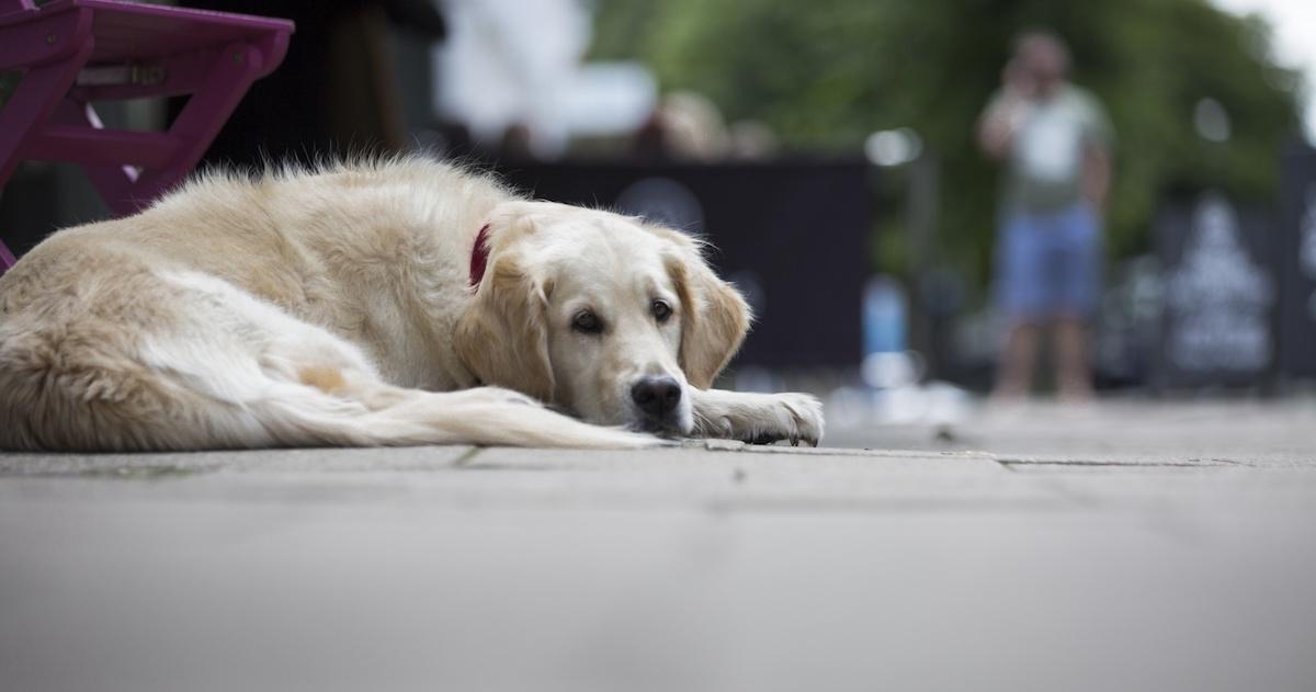 Dog with depression.jpg