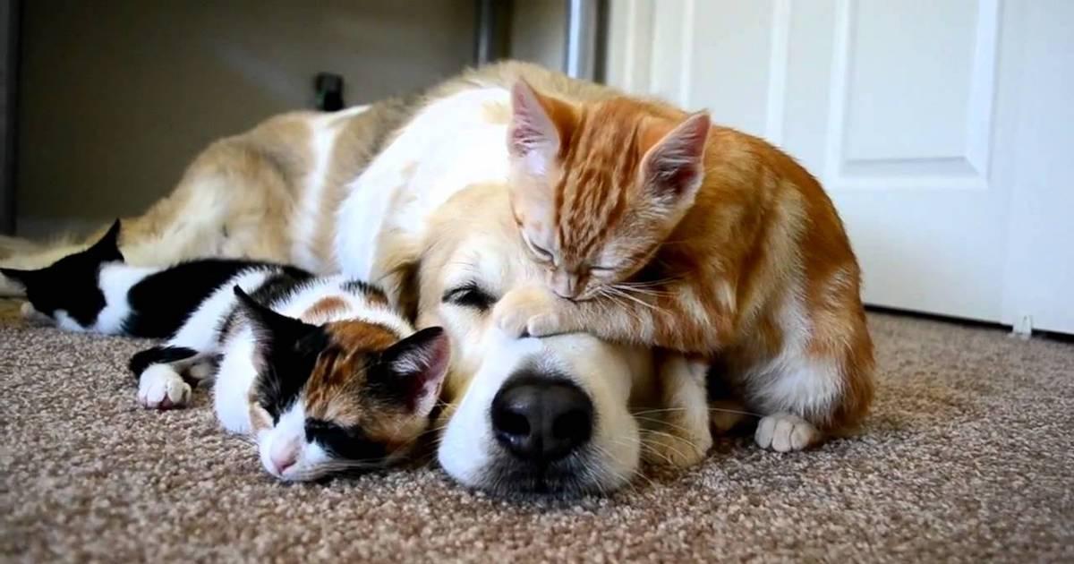 Dog Cat Person.jpg
