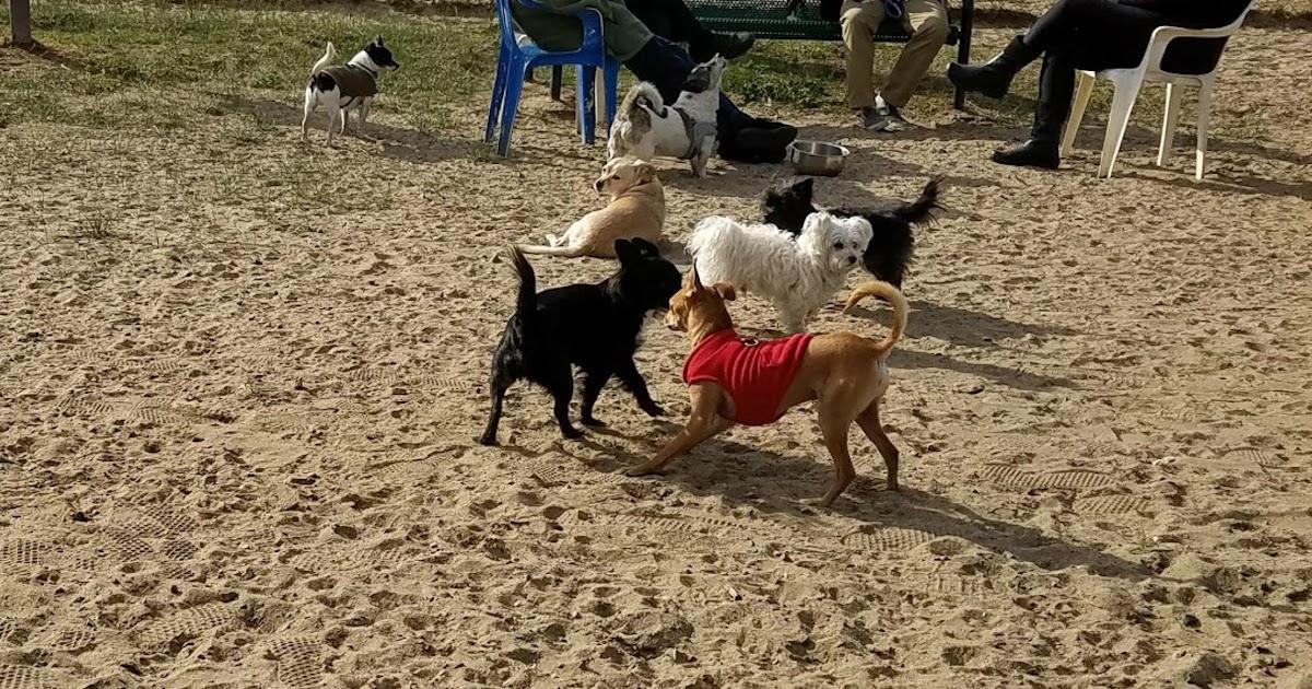 Genius Dog Chase.jpg