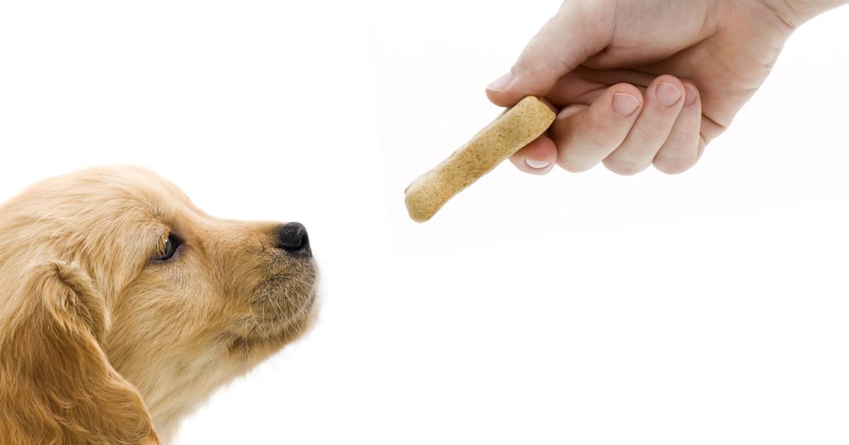 dog-treat-.jpg