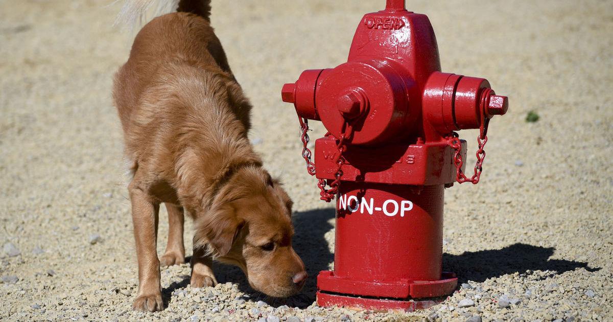 Hydrant Dog.jpg