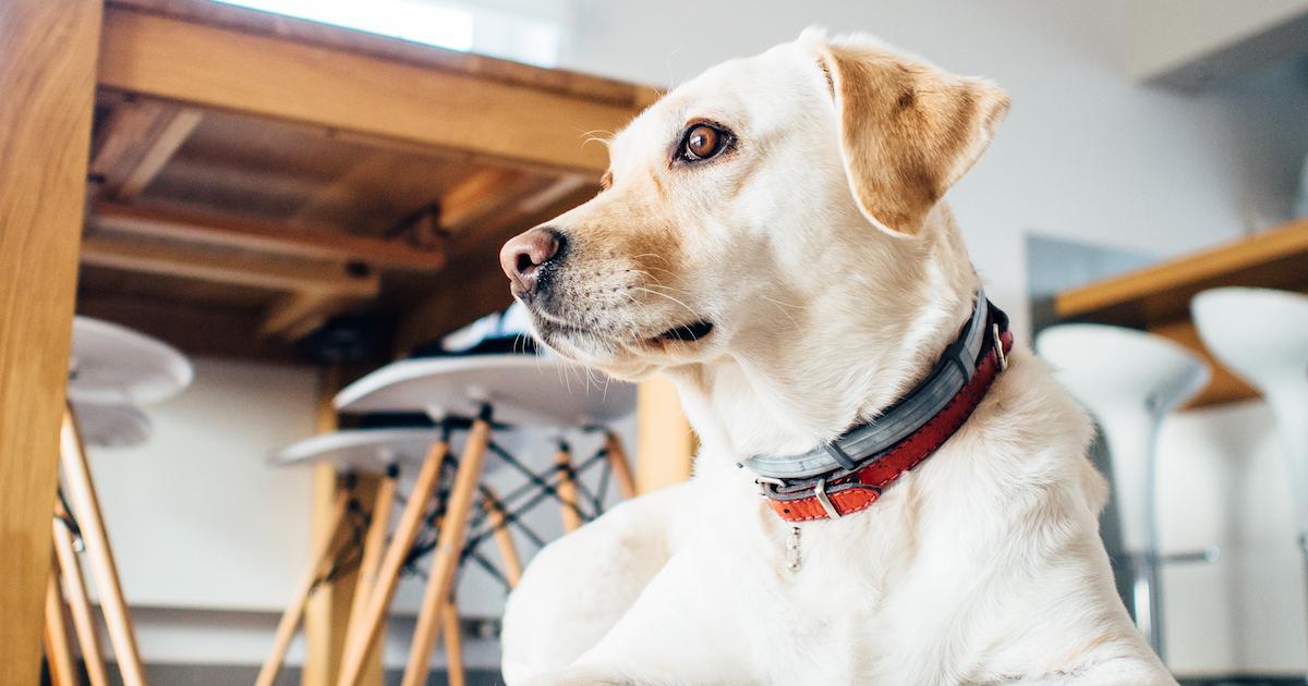 Dog senses ghost.jpg