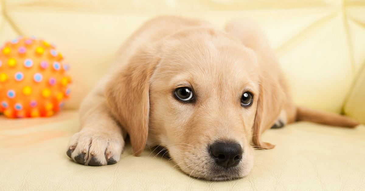 Puppy Bark Mitzvah.jpg