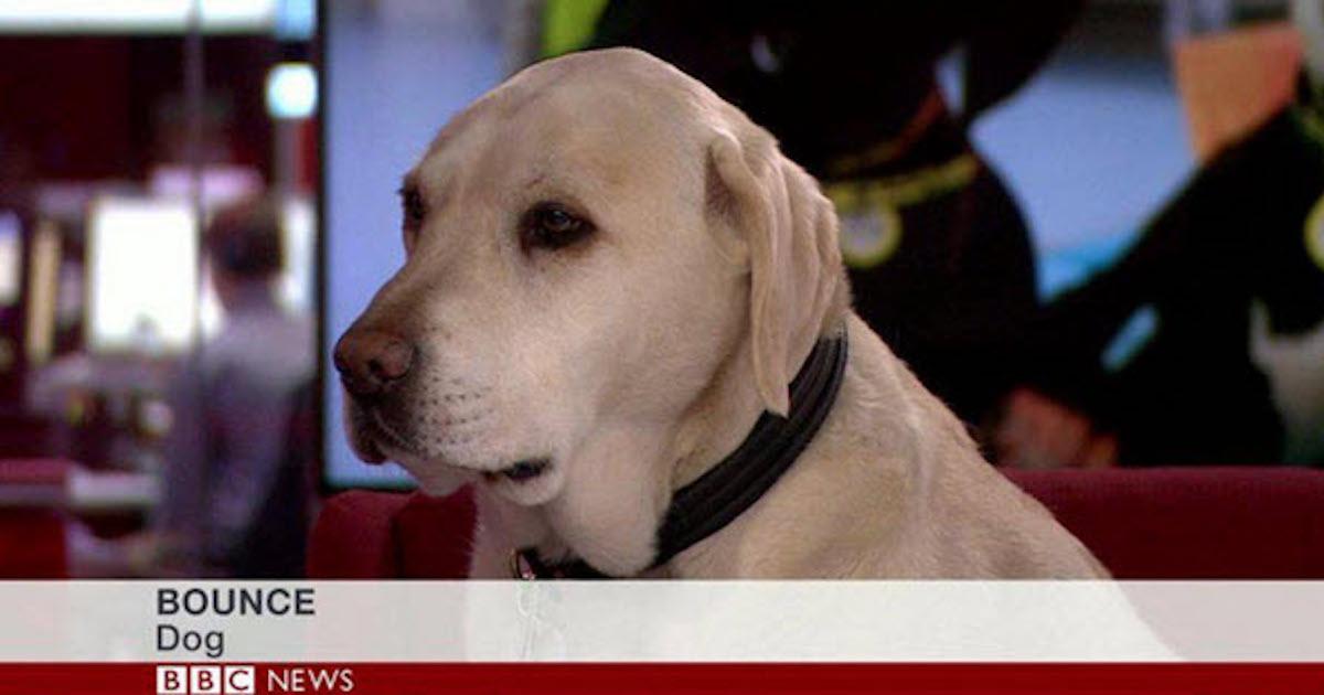 Dog Interviewed.jpg