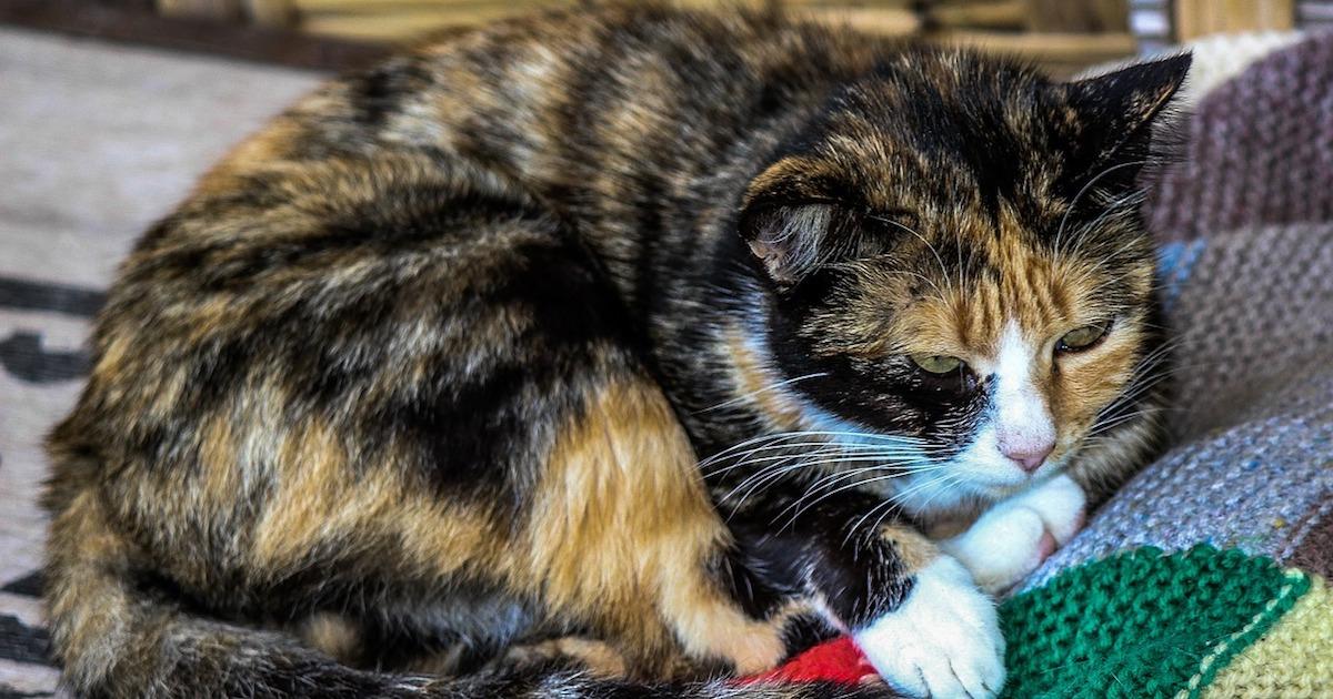 Cat Scratches.jpg