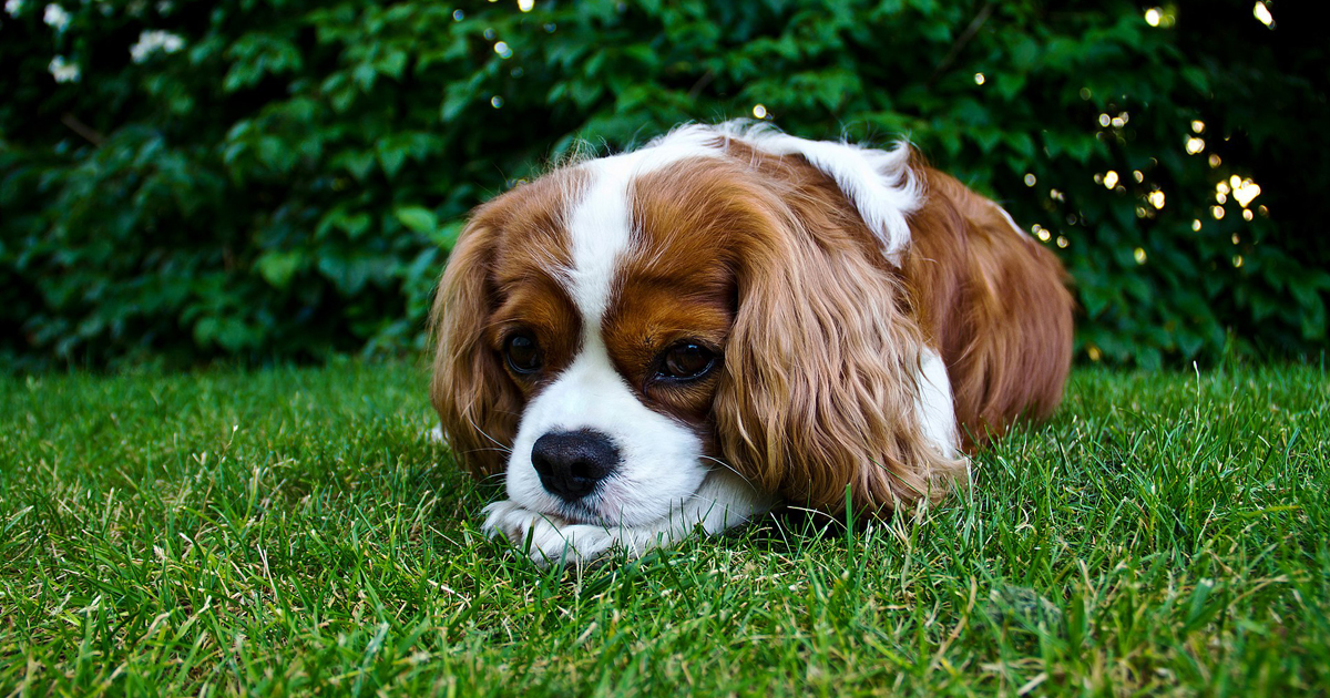 Dog Takes Herbal Remedy For Upset Stomach, Eats Grass.jpg
