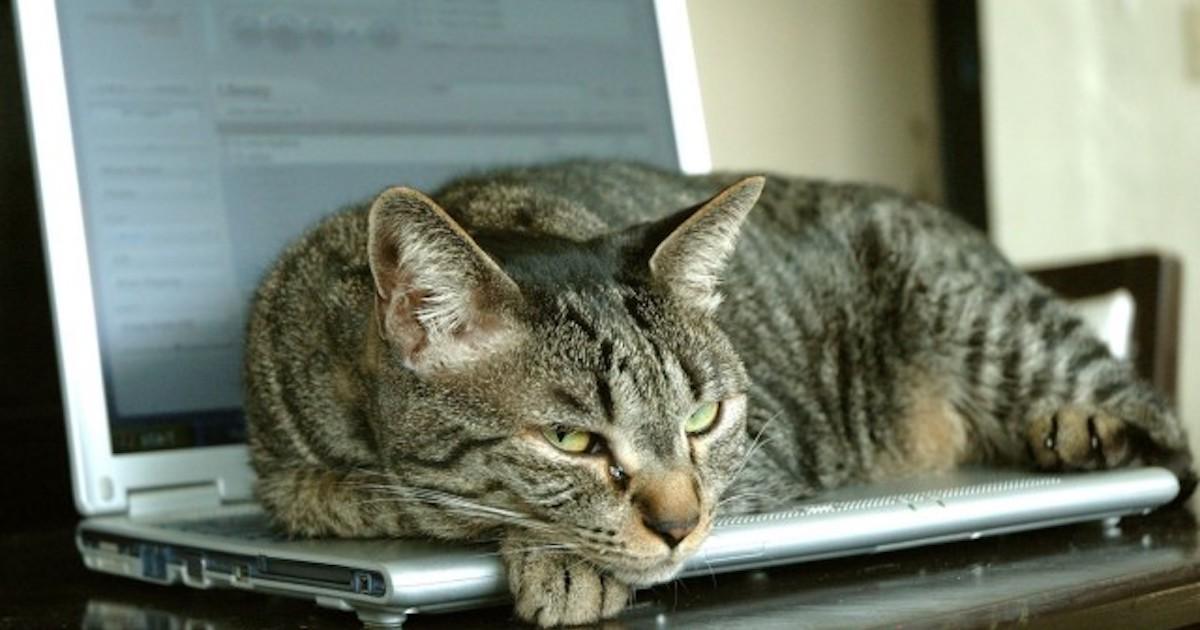 Cat On Laptop.jpg