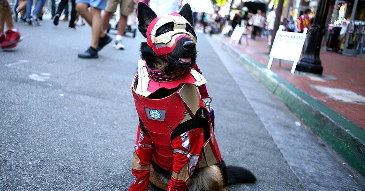 Dog Cosplaying.jpg