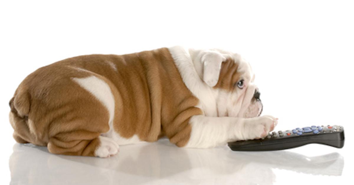 dog-watching-tv.jpg
